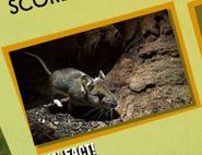 Mice Image 2