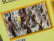 Beetles Image 2