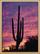 Coral Canyons Saguaro Cactus