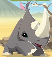 Updated rhino