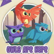 Owls are here