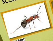 Ant Image 2