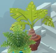 Baby Palm Tree Animal Jam Wiki Fandom Powered By Wikia