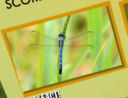 Dragonfly Image 3