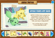 Jamaa Journal Arctic Foxes are back