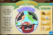 Raccoons in jamaa journal