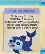 Traveling Dolphins Jamaa Journal