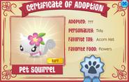 Certificate-of-Adoption Pet-Squirrel