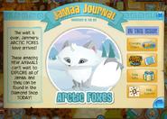 Arctic-foxes