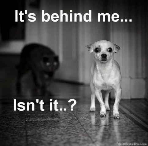 File:Cat-meme-scary-black-cat-dog-meme-funny-animals-funny-pictures thumb.jpg