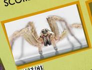 Tarantula Image 1