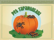 Daily-Explorer Pet-Tarantulas-Pumpkin