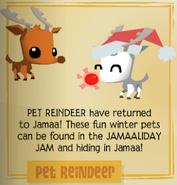 Reindeer new