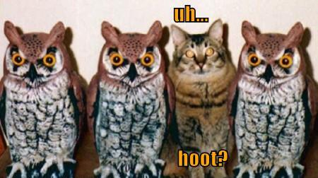 File:Funny-pictures-cat-poses-as-an-owl.jpg
