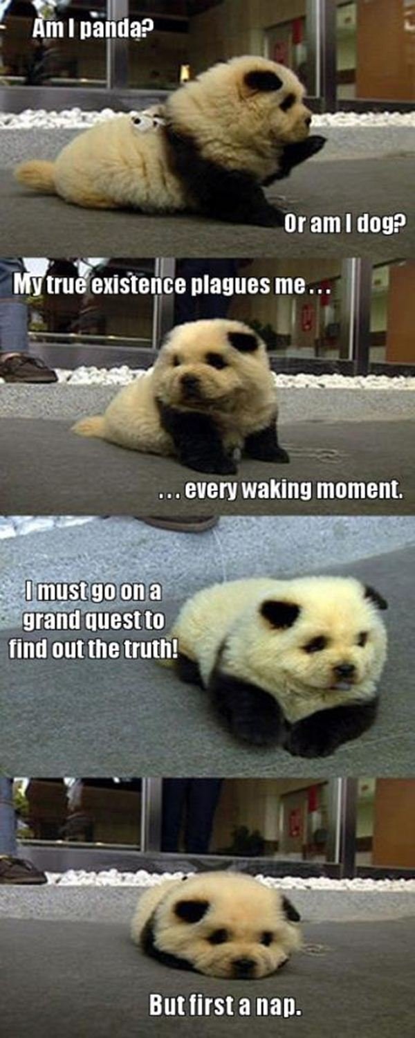 Funny Animal Pictures With Captions Jpg