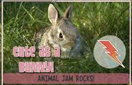 Bunnyjag