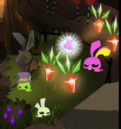 Bunny Finder