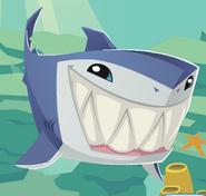 Updated Shark