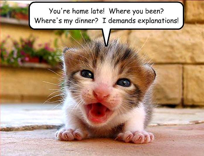 image cat funny animal humor 20091623 697 533 jpg animal jam