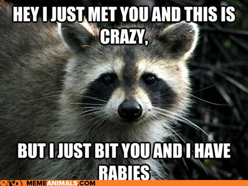 Funny Animal Memes For Adults : Funny animal memes part