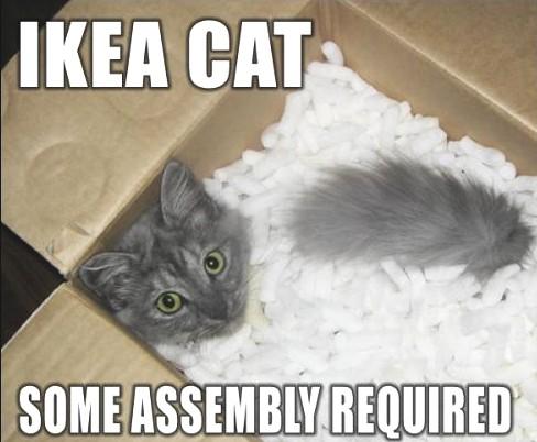 File:Funny cat 05.jpg