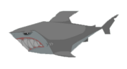Shark graphic