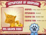 Pet Golden Pony