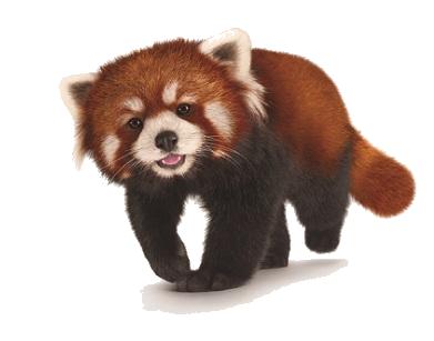 Image - Red-panda-png-red-panda-sorta-chibi-by-pyxelle-art ...