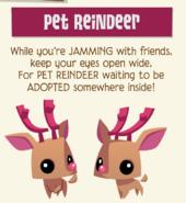 Pet Reindeer Jamaa Journal 2018