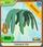 Seaweed Hair green
