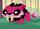 Pet sabertooth