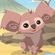 Koala artwork002