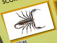 Scorpion Image 1