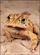 Toad Balloosh