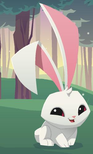 Bunny | Animal Jam Wiki | FANDOM powered by Wikia