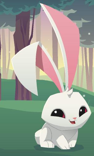 Bunny Animal Jam Wiki Fandom Powered By Wikia
