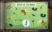 Birds of Paradise-0