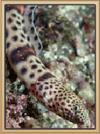 Spotted Eel Snake