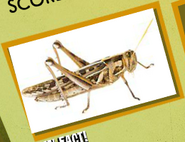 Grasshopper Image 3