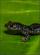 Salamander Balloosh