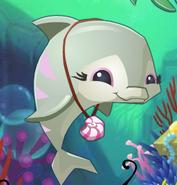 Wiki Dolphin
