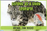 Snowleopardjag