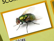 Flies Image 3