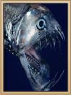 Deep Blue Viperfish