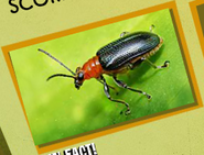Beetles Image 3