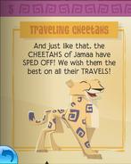 Traveling cheetahs 1