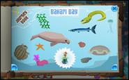 Journey Book of Bahari Bay