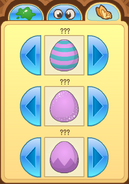 Pet-Egg Features-2