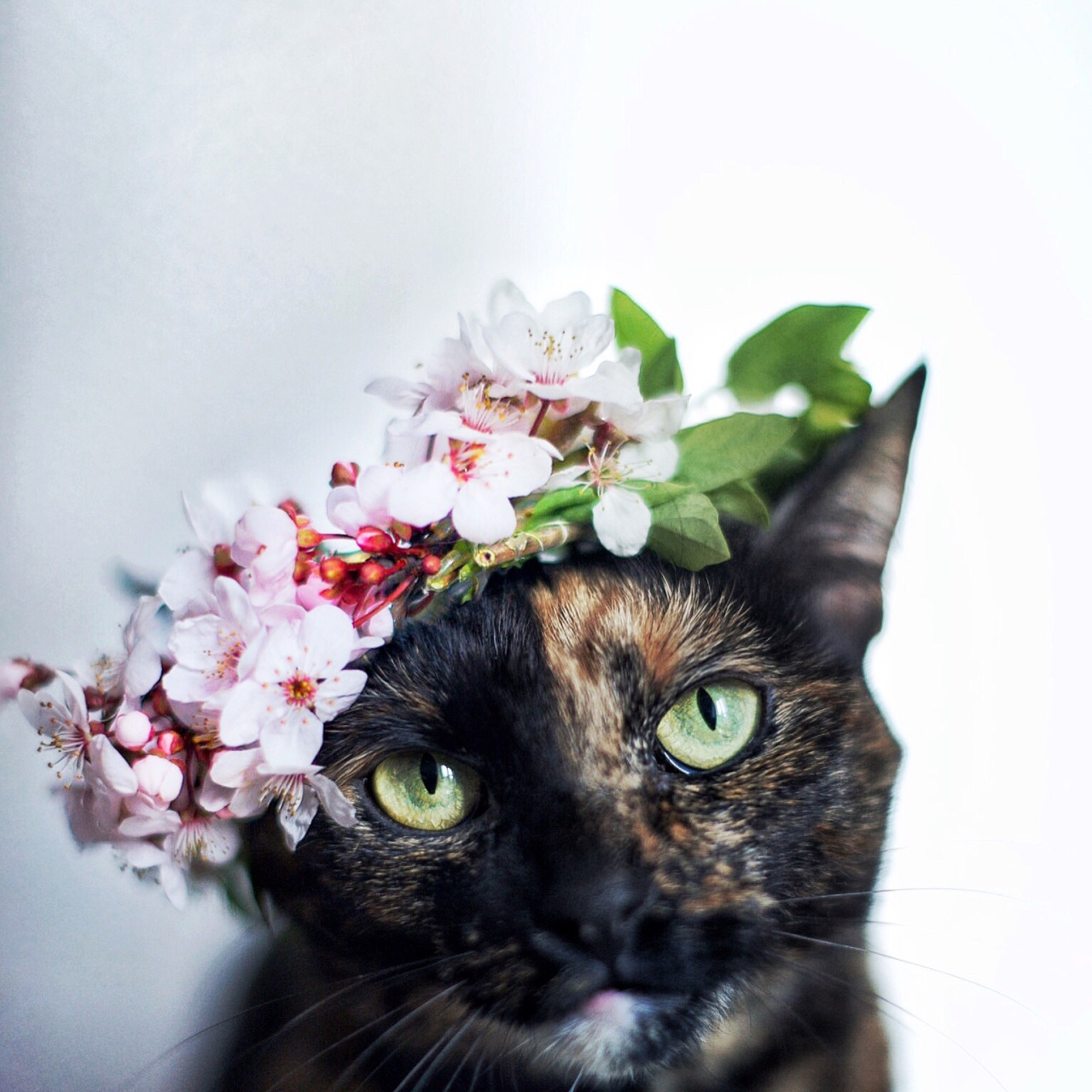 Image flower crown tortieg animal jam wiki fandom powered flower crown tortieg izmirmasajfo