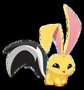 Skunk Tail-Bunny
